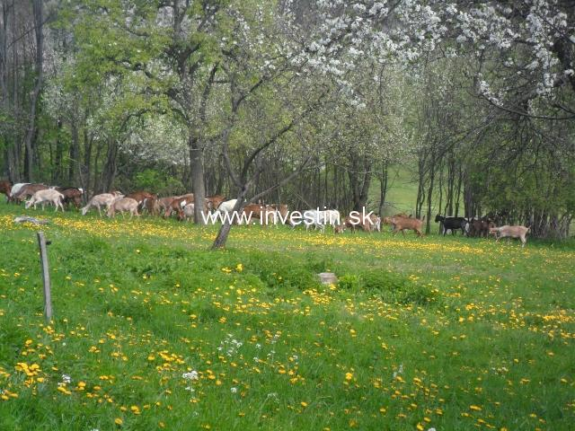 70 ha private land with goats and horses