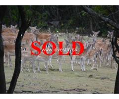 105 ha Game Hunting Area For Sale